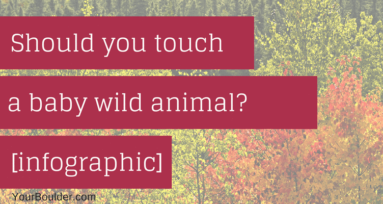 Should You Touch a Baby Bird or Other Wild Child Varieties? [Infographic]
